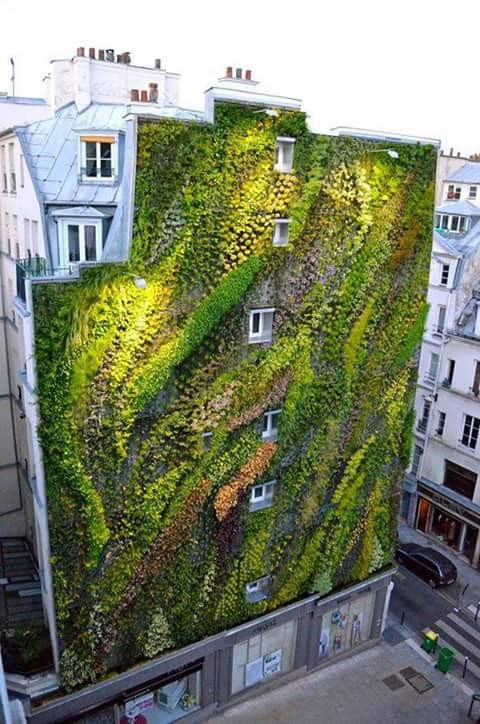 Architecture & Vegetation